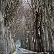 a long avenue somwhere in france